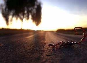 Scorpion-street_01_small.jpg