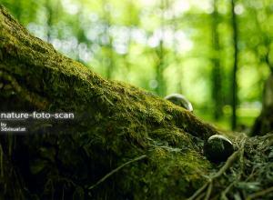 nature-macro-1.jpg